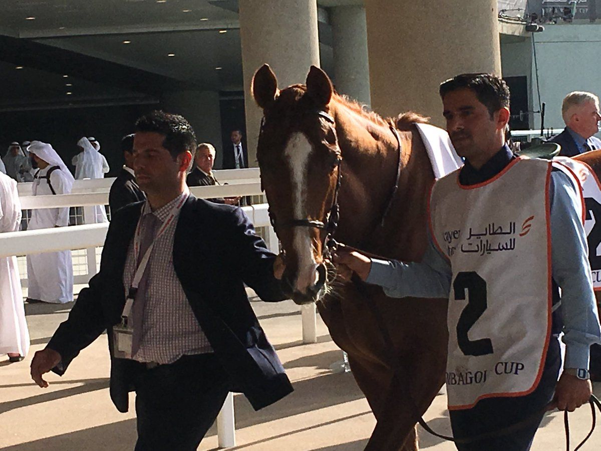 call-the-wind-20190330-dubai-gold-cup.jpg